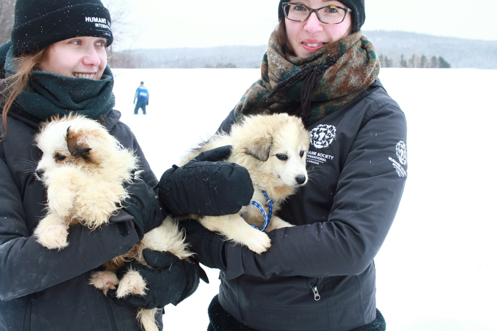 Quebec Dogs Left Outside In Freezing Temperatures Rescued