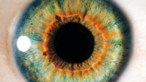 Swiss researchers are developing contact lenses that contain tiny telescopes to boost vision and zoom in and out with the wink of an eye. (Anemone/shutterstock.com)