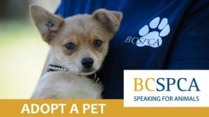 BC SPCA Adopt a Pet