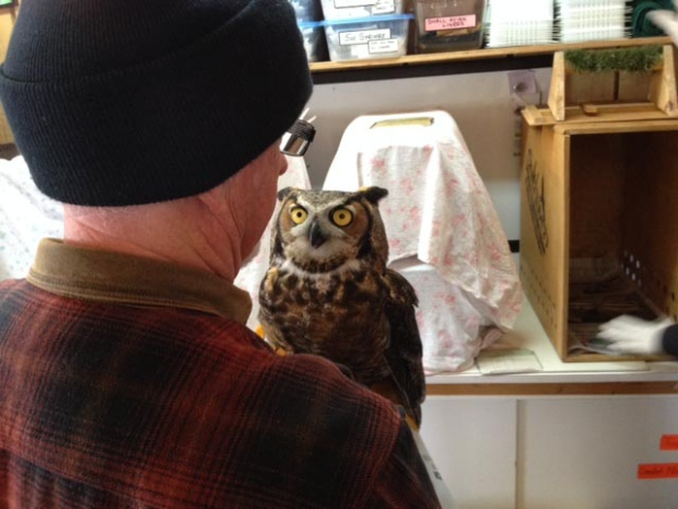 Helping animals at the Salthaven Wildlife Rehabilitation and Education Centre in Mt. Brydges, Ont. on Thursday, Feb. 26, 2015. (Shelden Rogers for CTV London)