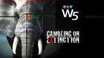 W5 Extinction