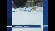 CTV Kitchener: Shoveling dog a hit