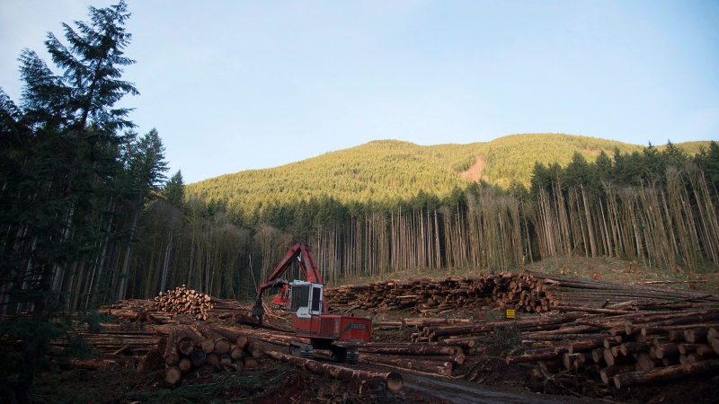 A section of forest is harvested by loggers near Youbou, B.C., on Wednesday, Jan. 14, 2015. (Jonathan Hayward / The Canadian Press)
