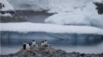 Gentoo penguins stand on rocks near the Chilean station Bernardo O'Higgins, Antarctica on Jan. 22, 2015. (AP / Natacha Pisarenko)