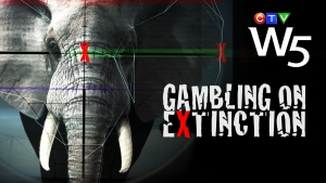 Gambing on Extinction