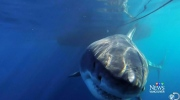 CTV Vancouver: How likely are shark attacks?