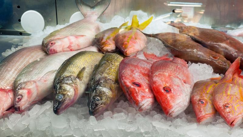 A stock image of fish at a market. (Kenneth Sponsler/shutterstock.com)