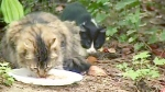 CTV Vancouver: 34,000 stray cats roaming Surrey