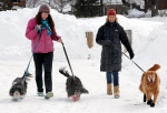 Malia Ebel, left, walks her dogs, Seymour, left, and Sanders, both Cavalier King Charles spaniel mixes, alongside Wendy Olcott and her golden retriever, Sunny, in Concord, N.H., on Sunday, March 1, 2015. (AP / Jim Cole)
