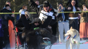 Scott Janssen keeps control of his sled rounding the corner near Goose Lake during the ceremonial start for Iditarod 42 in Anchorage, Ak. on March 1, 2014. Warm weather has forced the race farther north. (Anchorage Daily News / Anne Raup)