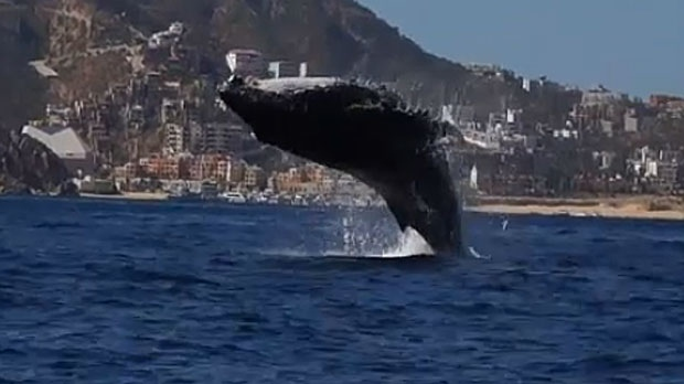 Whale incident