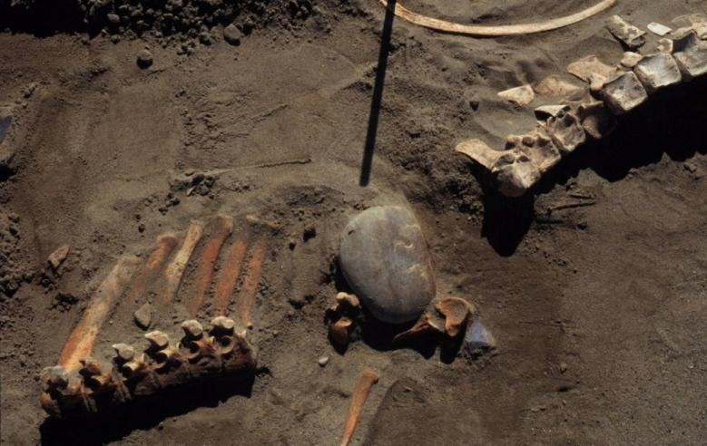 Ancient bones in Alberta