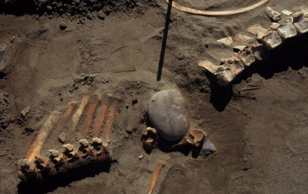 Ancient bones in Alberta