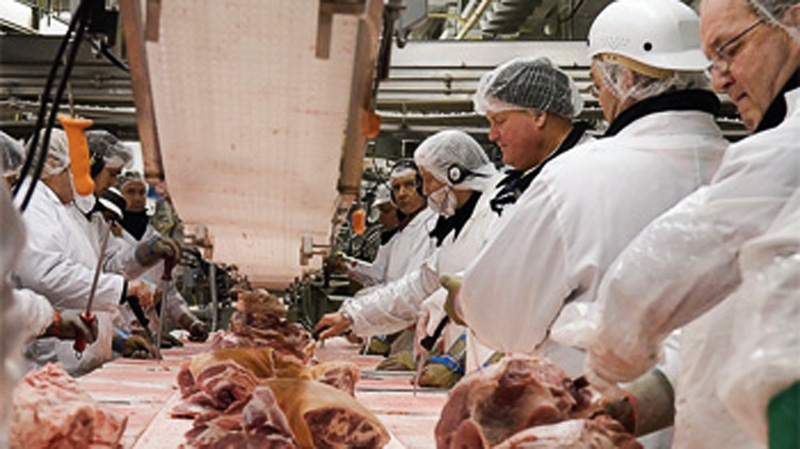 Olymel workers are seen in a file photo from csn.qc.ca