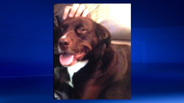 Owner finds remains of their dog buried near their Renfrew ...