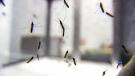 CTV Winnipeg: Mosquitoes