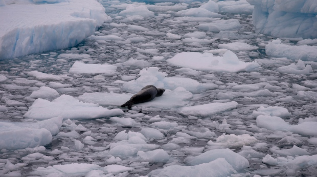 Life survives in Antarctic
