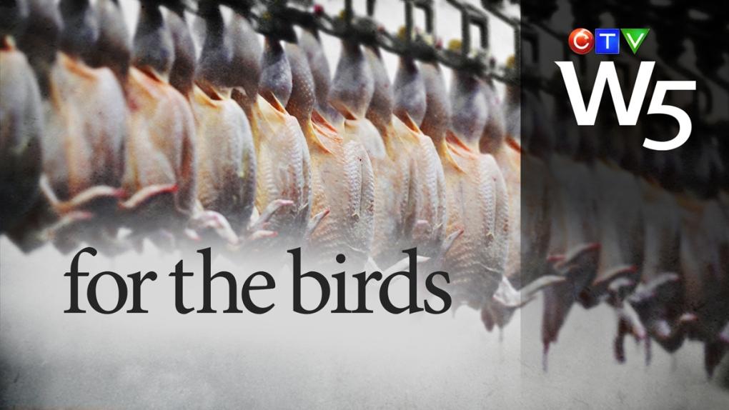 Hidden camera investigation reveals chicken slaughterhouse