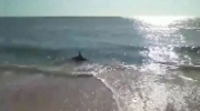Shark spotted in knee-deep at Florida beach