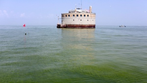The City of Toledo water intake crib is surrounded by algae in Lake Erie, about 2.5 miles off the shore of Curtice, Ohio, Aug. 3, 2014. (AP / Haraz N. Ghanbari)