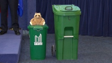 Racoon resistant green bin showed off at city hall