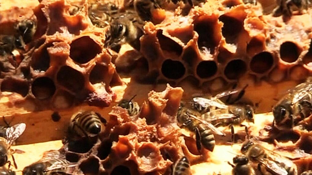 CTV Barrie: Bee die-off