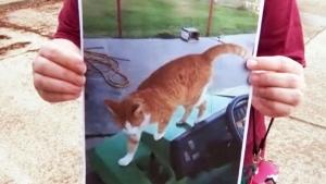U.S. vet posts photo with dead cat on Facebook