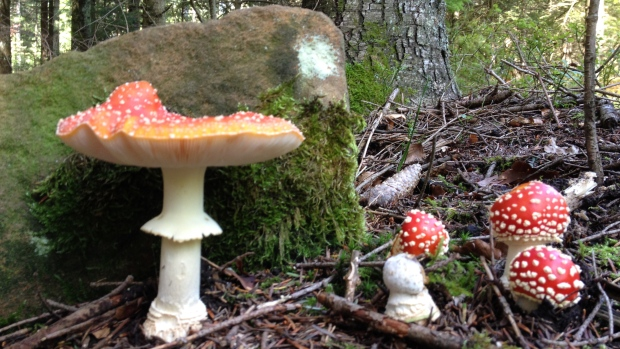 mushrooms in Germany's Black Forest