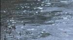 CTV Northern Ontario: North Bay flood fears
