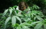 Medical marijuana plants are shown at a medical marijuana facility in Richmond, B.C., on March 21, 2014. (Darryl Dyck / THE CANADIAN PRESS)