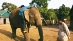 CTV News Channel: 'Last of the Elephant Men'