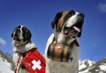 The popular ski resort of Zermatt has banned tourists from posing for photos with Saint Bernards, following complaints that some of the dogs were kept in miserable conditions. (©AFP PHOTO / FABRICE COFFRINI)