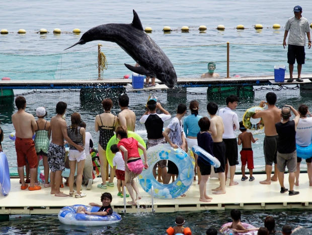Dolphin in Japan