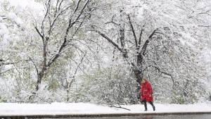 A woman makes her way through a spring snowstorm in Edmonton on Wednesday, May 6, 2015. (Nathan Denette / THE CANADIAN PRESS)