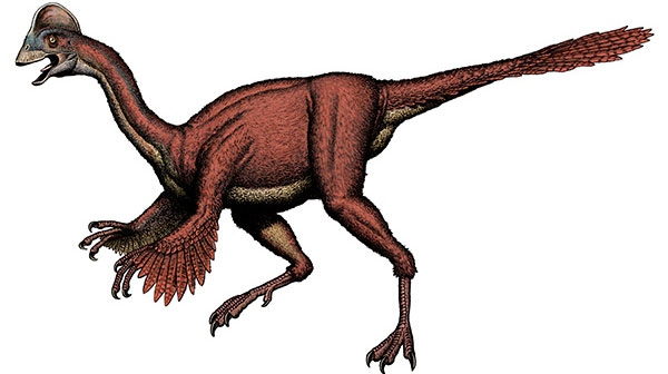 Feathered Dionsaur