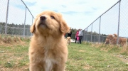 CTV Atlantic: Nova Scotia's provincial dog
