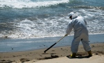 A cleanup crew worker rakes oil-contaminated seaweed into piles at El Capitan State Beach, north of Goleta, Calif., Friday, May 22, 2015. Officials say the sheen of oil is now thinner than a coat of paint and is becoming harder to skim from choppy, wind-driven waters. (AP/Michael A. Mariant)