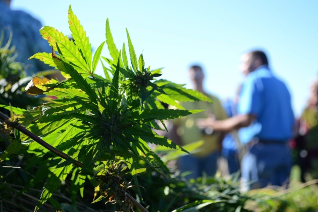 Hemp industry taking root in US