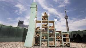Bee hotels coming to Canada