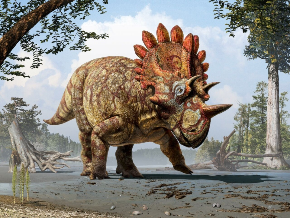 Regaliceratops peterhewsi is shown in this artist's reconstruction set in the Late Cretaceous Period in Alberta. (Julius T. Csotonyi / Royal Tyrrell Museum)