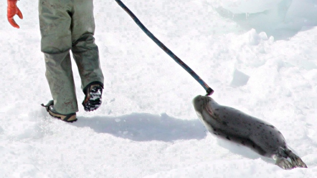 Seal hunt St. Lawrence