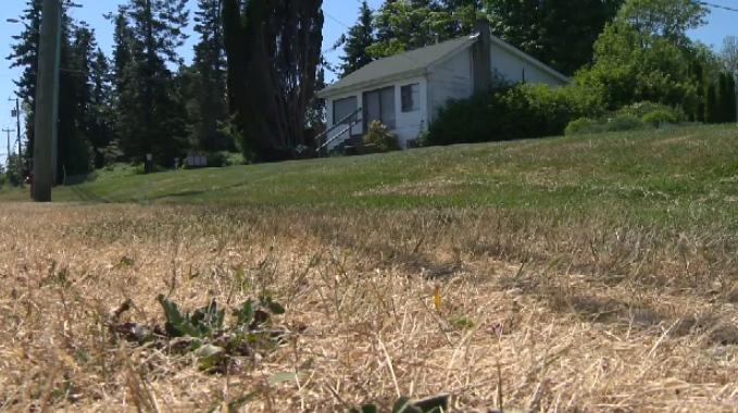 borwn lawn