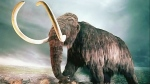 CTV London: Making sense of mammoth mystery