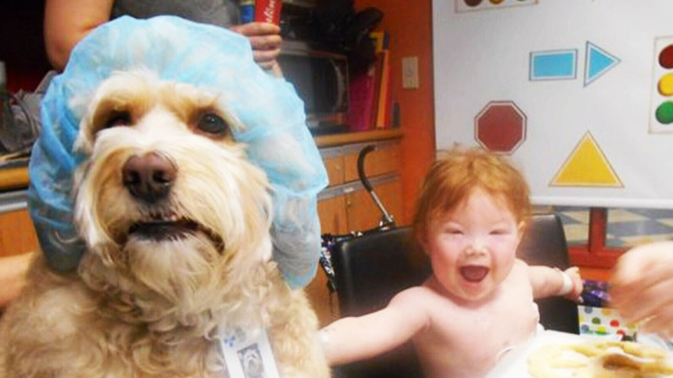 Doctor Dog Pet Therapy Piloted At Edmonton Children S