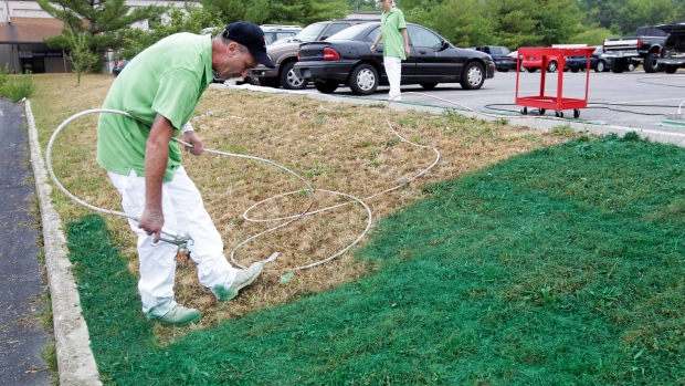 When a lawn turns brown in the hottest, driest days of summer, it can mean  one of two things: either the grass has gone dormant to protect itself, ... - No Mow Grass? No Problem: 5 Low-maintenance Lawn Alternatives CTV News