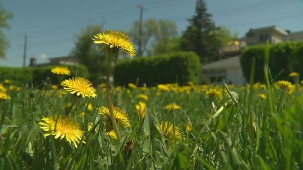 Edmonton pesticides