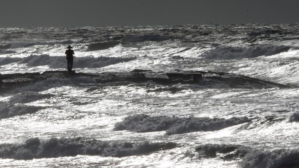 Near-record 'dead zone' predicted in Gulf of Mexico