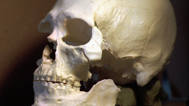 A plastic casting of the skull from the bones known as Kennewick Man. (AP / Elaine Thompson)