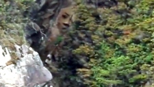 Mystery shrouds 7-foot carving of face