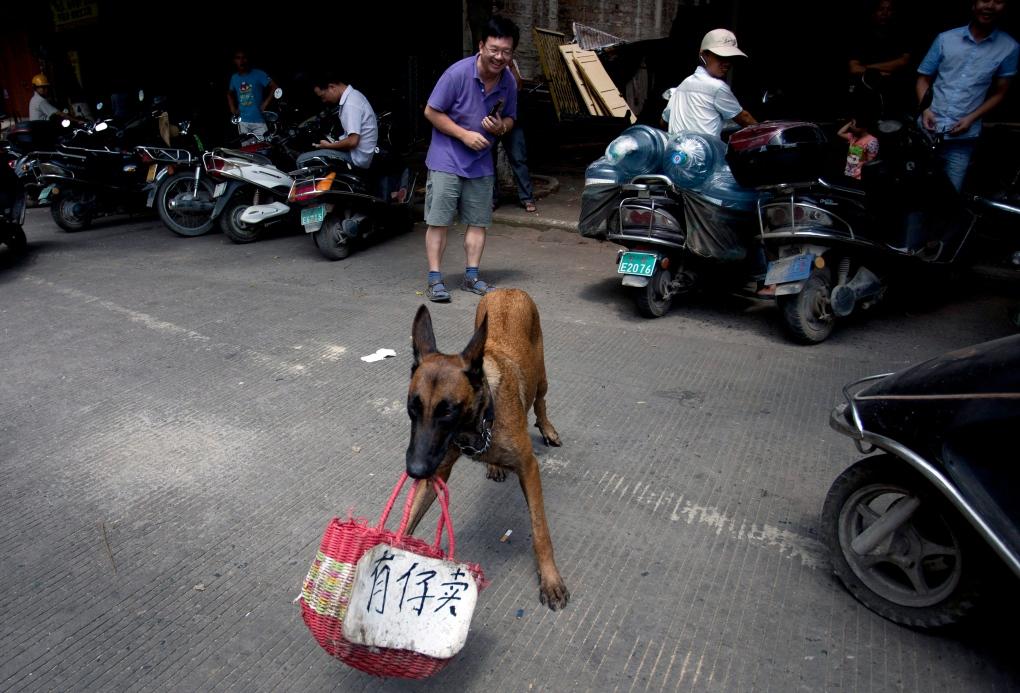 China dog meat